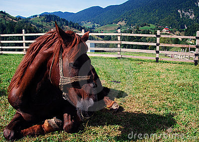 Distensione del cavallo