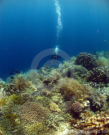 DIVE WITH BEAUTIFUL CORALS