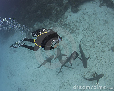 Diver Above Lemon Sharks