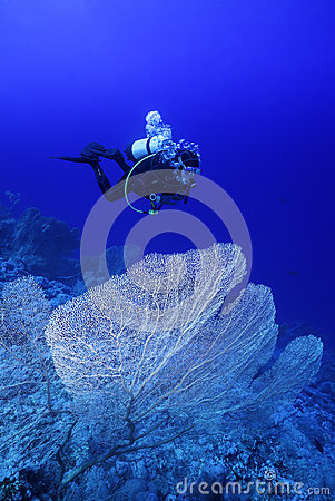 Diver above the Reef