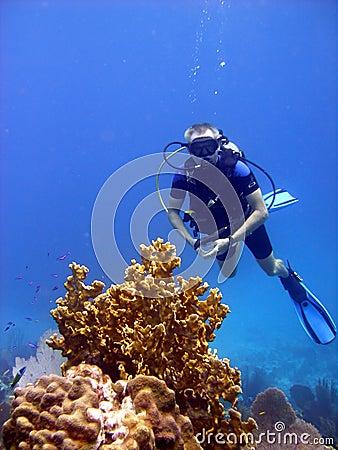 Diver admires fire coral.