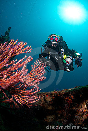 Free Diver And Coral Royalty Free Stock Photo - 15050755