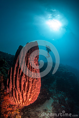 Diver assess some hard coral and a barrel sponge