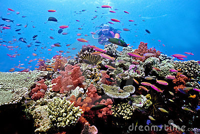 Diver on Astrolabe reef