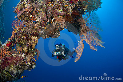 Diver with camera along the reef, Red Sea
