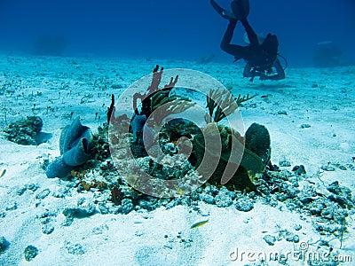 Diver in Cozumel