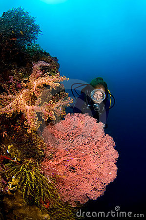 Diver and Gorgone coral Indonesia Sulawesi