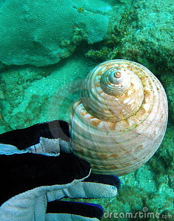 Diver holds shell