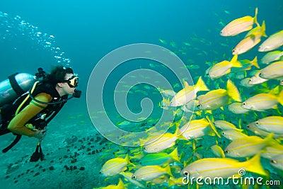 Diver meets fish