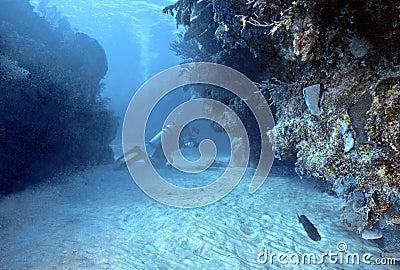 Diver in Roatan