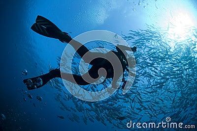 Diver s Silhouette