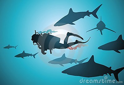 The diver and sharks