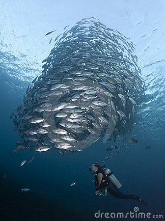 Free Diver With A School Of Jacks Royalty Free Stock Photography - 20327307