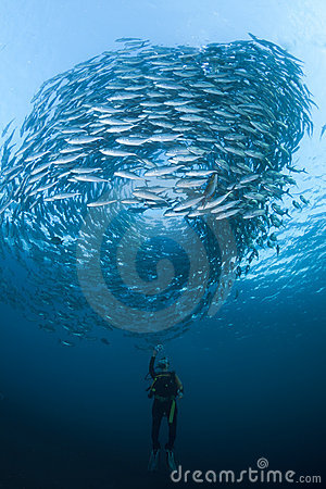 Free Diver With A School Of Jacks Royalty Free Stock Photography - 20327407