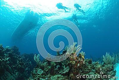 Divers ascending.