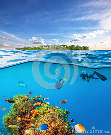 Free Divers Below The Water Surface Exploring Sea Life Royalty Free Stock Images - 89358599