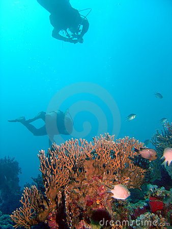 Free Divers Over Corals Stock Photos - 653843