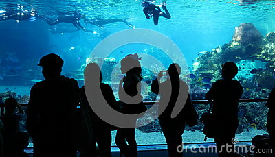 People watching divers aquarium scene Editorial Photography