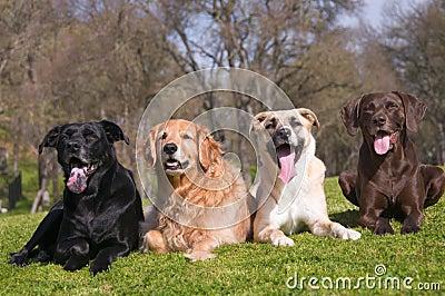 Diversity Dog Family