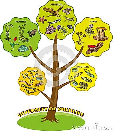 Diversity of wildlife