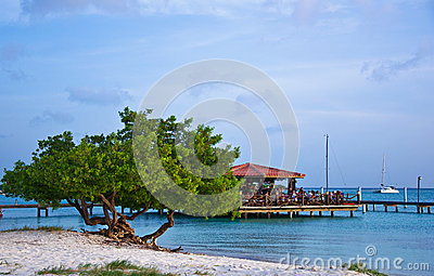 Divi Divi Tree, Aruba Editorial Stock Image