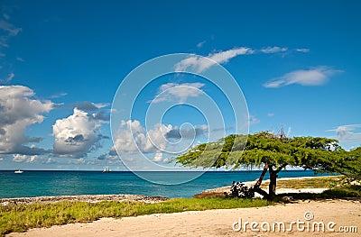 Divi-Divi Tree of Aruba. Sky. Ocean. Tropics.