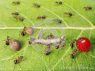 ants cargo traffic in anthill, teamwork