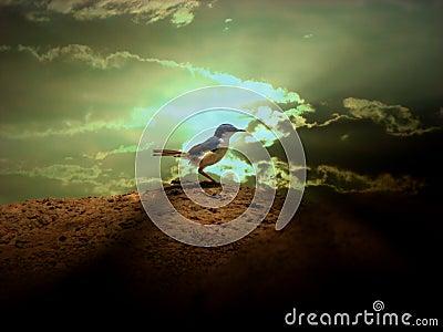 Divine Bird