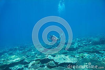 Diving through a natural treasure
