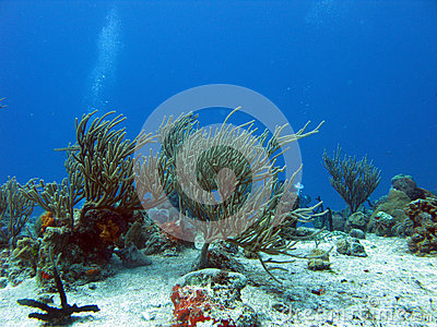 Diving in tropical seas
