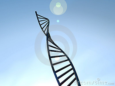 DNA 17