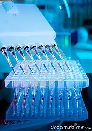 DNA amplification assay
