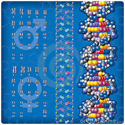 DNA and Caryotype