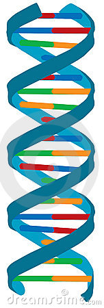 DNA color illustration, isolated