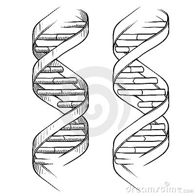 Free DNA Double Helix Drawing Royalty Free Stock Photography - 22499897