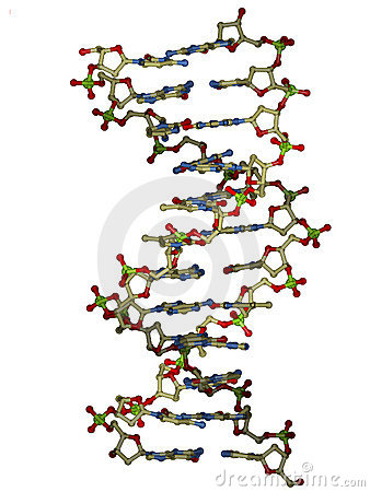 Free DNA Double Helix Molecule Stock Images - 459084