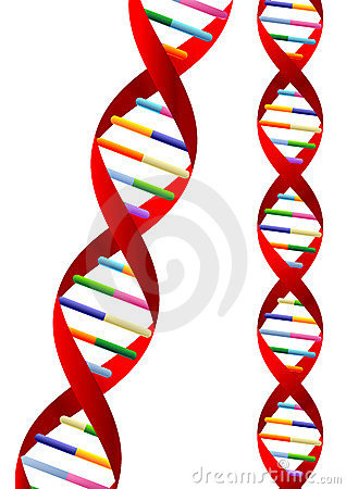 Vector on Dna Helix Representation Isolated Over White Background