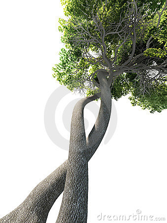 Free Dna Modified Tree Genetic Stock Photography - 4433322