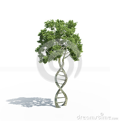Free DNA Shaped Tree Royalty Free Stock Photo - 31024665