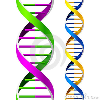 Free DNA Strands Royalty Free Stock Image - 8132316