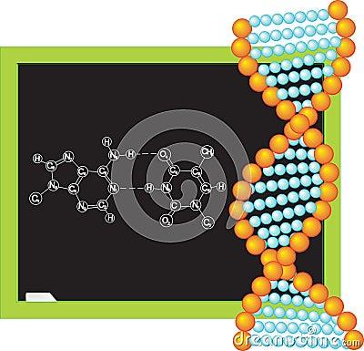 DNA. Vector illustration