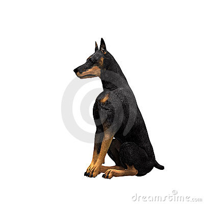 Free Doberman - 01 Royalty Free Stock Photos - 2113018