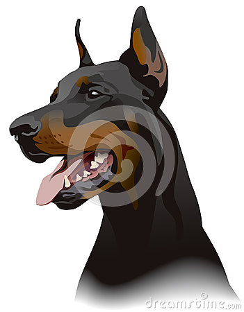 Doberman dog. Illustration