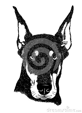 Free Doberman Pinscher Dog Portrait Illustration In Vector Royalty Free Stock Photography - 68709377