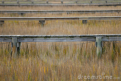 Docks in the marsh
