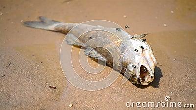 Dode vissen stock video