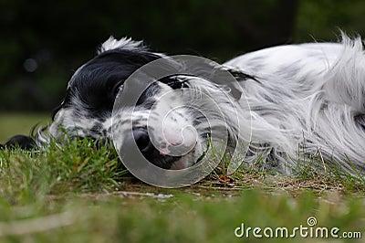 Dog 12