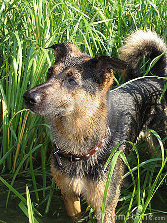 Free Dog Royalty Free Stock Photography - 12005047