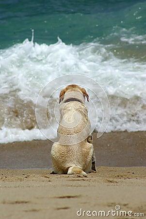 Free Dog Stock Image - 13764551