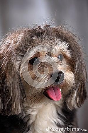 Free Dog Stock Photo - 13879360